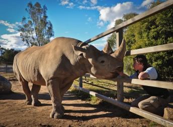 Jake Williams with Chikundo the Black Rhino. Pic: Sasha Brook